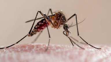 Исторический прорыв: ВОЗ одобрила широкое применение первой вакцины от малярии