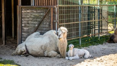 VIDEO   Saage tuttavaks: need on karantiini ajal Tallinna loomaaias sündinud imearmsad loomabeebid, keda nüüd esimest korda näha saab!