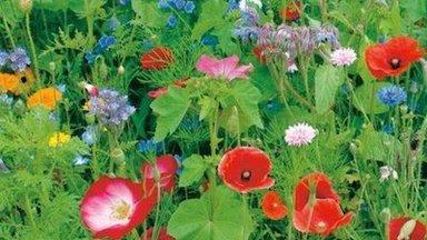 Lillemuru – ilu ilma niitmiseta