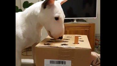 VIDEO | Fantastiline reaktsioon: kas sa oled kunagi oma koeraga sellist mängu mänginud?
