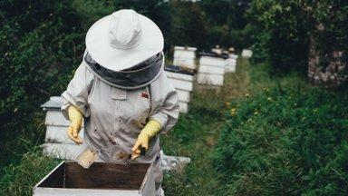 Hea teada: kuuldused mesilaste väljasuremise ohust ei vasta tõele