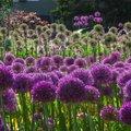 FOTOD | Saame lähemalt tuttavaks ilulaukudega: milliseid neid on ja mida nad vajavad? Millise võiksid omale aeda panna?