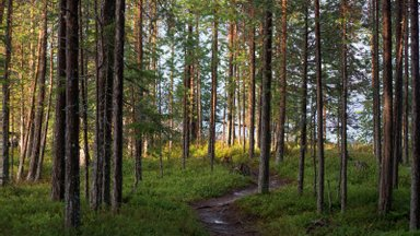 Metsaühistu konkureerib tuntud oksjoniportaalidega! Esmakordselt on oksjonil mitmesaja hektari suurune pakett