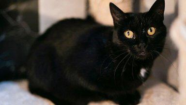 Mazikeeni lugu   Vaesel kassipreilil tuli endale ise uus kodu otsida, kui pererahvas ta auto pealt maha tõstis
