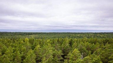 Kahjulikud tehingud viivad metsaomanike taskutest välja sadu tuhandeid eurosid