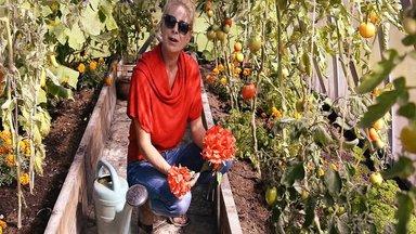 Ülle Lichtfeldti tomatiarmastus