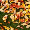 Lehtede riisumine teeb kasu asemel palju kahju — kuus head põhjust, miks tasuks lehed koristamata jätta